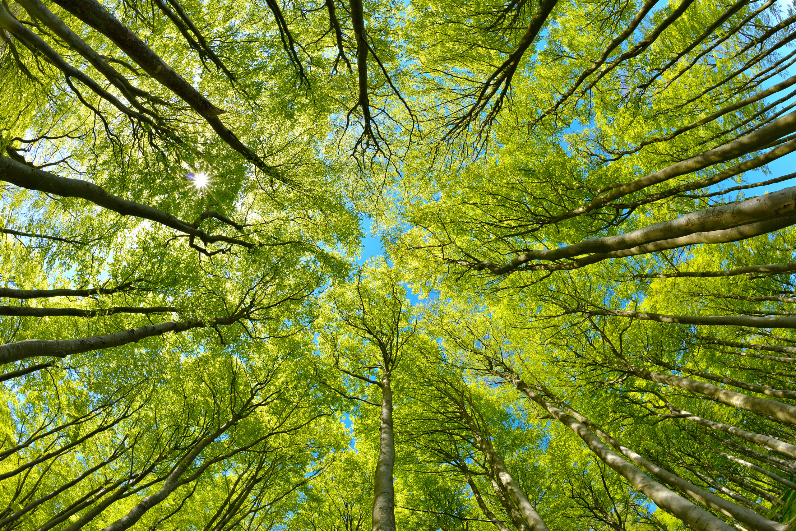 Механизация деревообработки